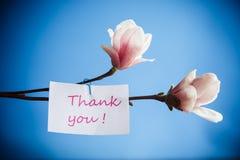 Bello fiore dentellare della magnolia Fotografia Stock Libera da Diritti