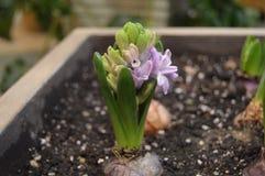 Bello fiore di fioritura nel recinto fotografia stock libera da diritti