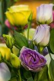 Bello fiore di Lisianthus immagini stock libere da diritti