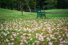 Bello fiore di tromba rosa su erba verde, fuoco selettivo Immagine Stock
