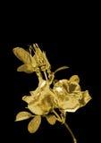 Bello fiore di una rosa da oro illustrazione di stock