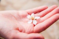 Bello fiore a disposizione fotografia stock