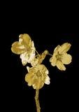 Bello fiore dorato royalty illustrazione gratis
