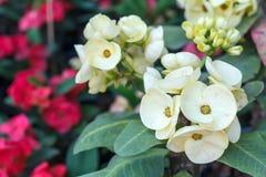Bello fiore e fondo verde della foglia in giardino Fotografia Stock