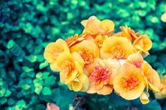 Bello fiore e fondo verde della foglia in giardino al giorno soleggiato della primavera o di estate Immagini Stock