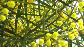 Bello fiore Flora Flowers in madre natura stock footage