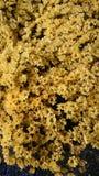 Bello fiore giallo Immagini Stock Libere da Diritti