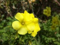 Bello fiore giallo! Fotografie Stock
