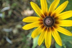 Bello fiore giallo Immagine Stock