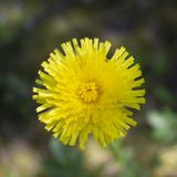 Bello fiore giallo su fondo vago immagine stock