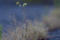 Bello fiore giallo tenero Fotografia Stock