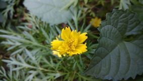 Bello fiore giallo in un giardino immagini stock