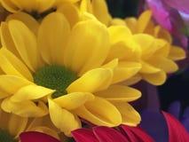 Bello fiore giallo in un mazzo Fotografia Stock