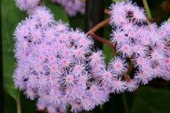 Bello fiore in giardino Immagine Stock