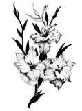 Bello fiore monocromatico e in bianco e nero isolato Linee di contorno disegnate a mano colpi Immagini Stock Libere da Diritti