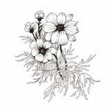 Bello fiore monocromatico e in bianco e nero isolato Linee di contorno disegnate a mano colpi Fotografie Stock