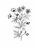 Bello fiore monocromatico e in bianco e nero isolato Linee di contorno disegnate a mano colpi Immagini Stock