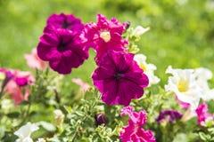 bello fiore in natura immagine stock
