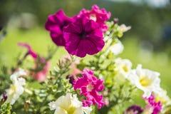 bello fiore in natura immagini stock