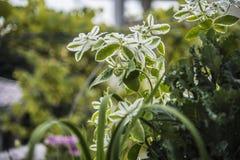 bello fiore in natura Fotografie Stock