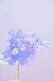 Bello fiore nel fondo grigio Fotografie Stock Libere da Diritti