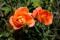 Bello fiore nella foresta Immagine Stock