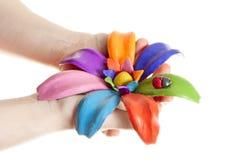 Bello fiore nelle mani Immagine Stock