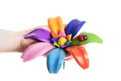 Bello fiore nelle mani Immagine Stock Libera da Diritti