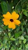 Bello fiore parassitario arancio Fotografie Stock Libere da Diritti