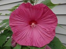 Bello fiore in piena fioritura Fotografia Stock Libera da Diritti