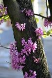 Bello fiore rosa sull'albero fotografia stock libera da diritti
