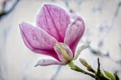Bello fiore, tempo di primavera Fotografie Stock