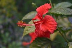 Bello fiore in un giardino fotografia stock