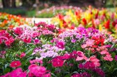 Bello fiore variopinto Immagini Stock Libere da Diritti