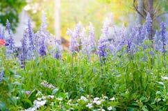 Bello fiore variopinto nel giardino, bella natura fotografie stock