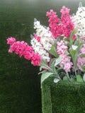 Bello fiore in vasi verdi Fotografia Stock