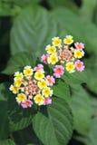 Bello fiore viola Immagini Stock