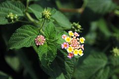 Bello fiore viola Fotografia Stock
