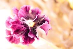 Bello fiore, viole del pensiero bello fondo astratto con Florida Fotografia Stock Libera da Diritti