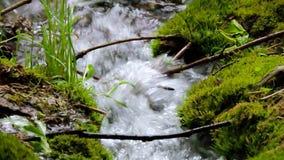 Bello fiume della cascata della corrente dell'insenatura della montagna che entra nella foresta verde di estate stock footage