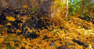 Bello fiume di Wenatchee - di Washington Autumn Nature Scenery fotografia stock