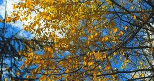 Bello fiume di Wenatchee - di Washington Autumn Nature Scenery immagini stock