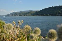 Bello fiume il Reno con i fiori vicino a Bacharach Fotografie Stock Libere da Diritti