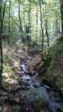 Bello fiume nel Karpatian Fotografia Stock