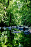 Bello fiume nella foresta Immagine Stock Libera da Diritti