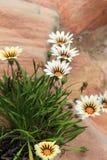 Bello, fogliame fertile e fiori messi fra la roccia di corallo di colore Fotografia Stock