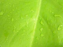 Bello foglio verde Fotografia Stock Libera da Diritti