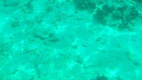 Bello fondale marino con i coralli e la luce solare video d archivio