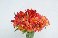 Bello fondo arancio rosso della parete di Alstromeria Lily Flower Bouquet Neutral Gray modificato ora legale della molla Fotografie Stock