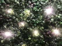 Bello fondo artificiale della parete della pianta con ligh illuminato immagini stock